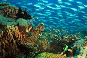 Raja Ampat coral reef for diving and snorkeling